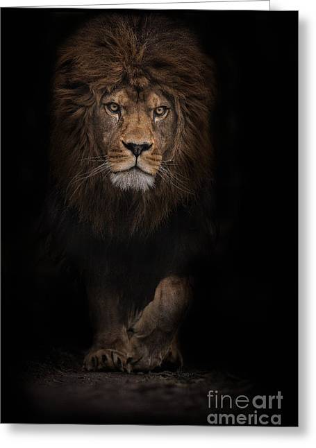 The Survivor Greeting Card by Ashley Vincent