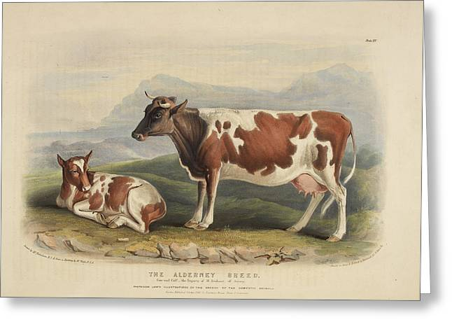 The Sussex Breed Greeting Card by British Library
