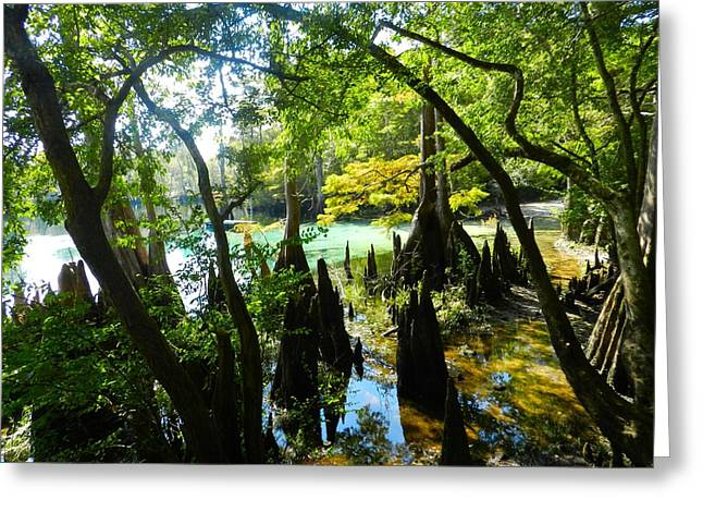 Julie Dant Photographs Greeting Cards - The Swamp by the Springs Greeting Card by Julie Dant