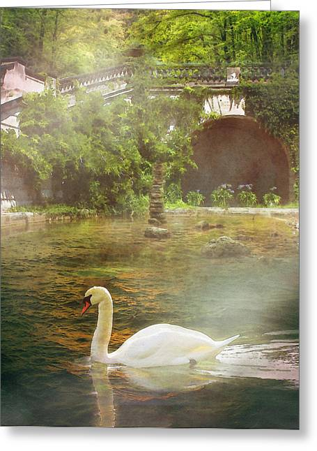 The Swan Lake Greeting Card by Pati Photography