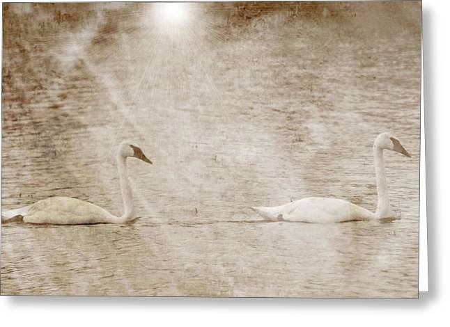 Death Of Waters Greeting Cards - The Swan Song Greeting Card by Dan Sproul