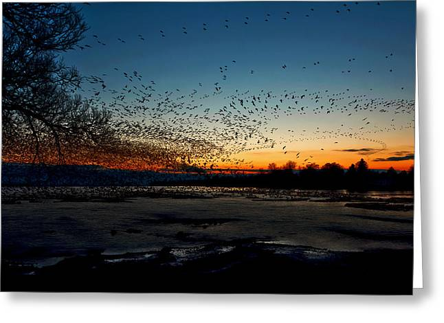 Time Stack Greeting Cards - The Swarm Greeting Card by Matt Molloy