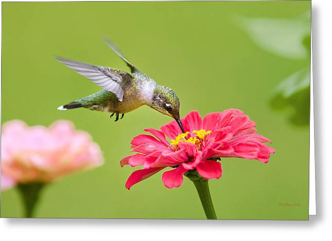 Hovering Greeting Cards - The Sweet Spot Greeting Card by Christina Rollo