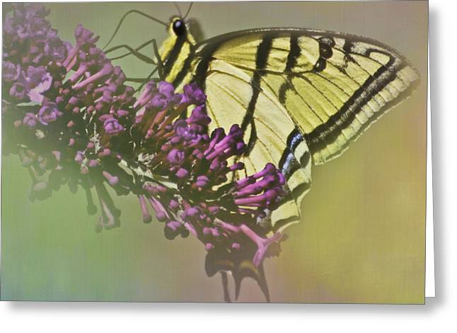 Sweet Spot Greeting Cards - The Sweet Spot Greeting Card by Diane Schuster