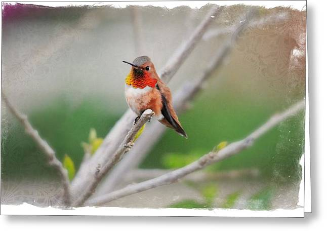 Migrating Hummingbird Greeting Cards - The Sweetness of Spring Greeting Card by Lynn Bauer