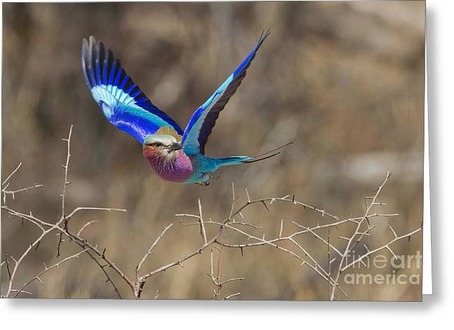 The Takeoff Greeting Card by Ashley Vincent