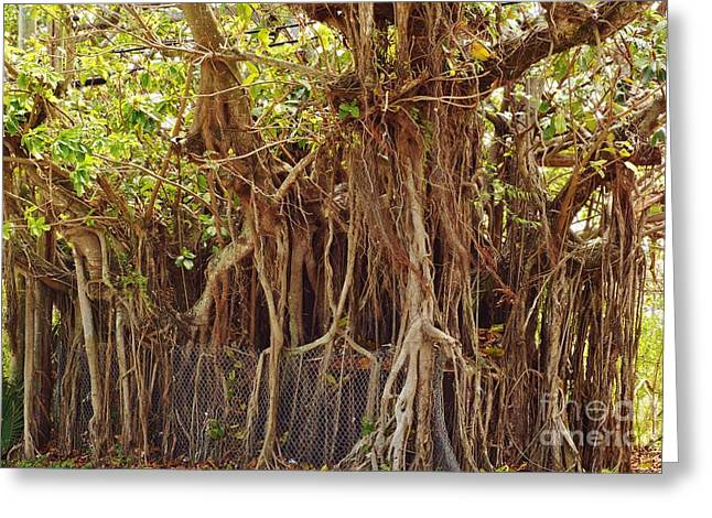 Ficus Aurea Greeting Cards - The Takeover Greeting Card by Lynda Dawson-Youngclaus