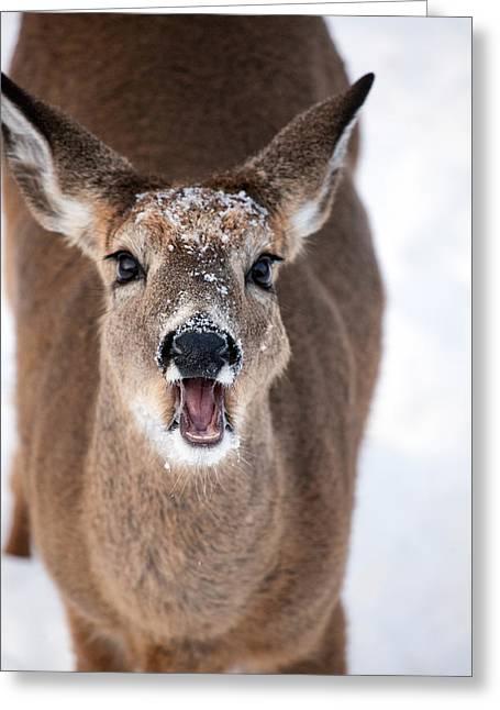 Deer In Snow Greeting Cards - The Talker Greeting Card by Karol  Livote
