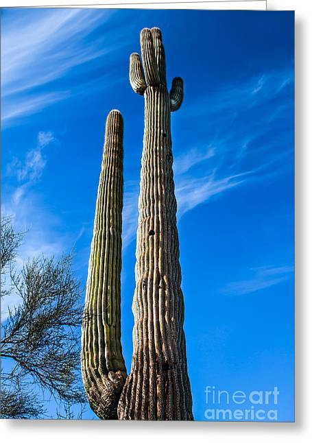 Pollinator Greeting Cards - The Tall Saguaro Cactus Greeting Card by Robert Bales