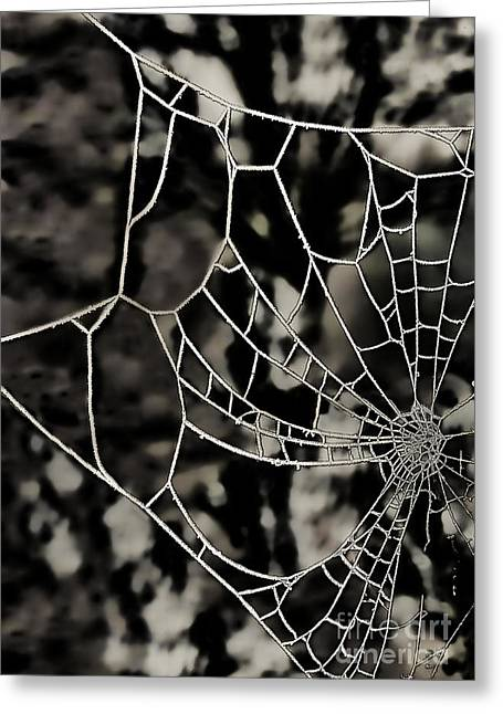 The Tangled Web Greeting Card by Sheila Laurens