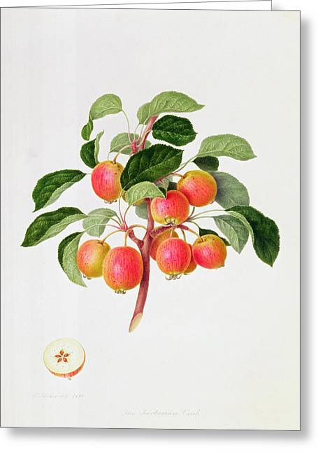 Recently Sold -  - Blooms Greeting Cards - The Tartarian Crab Apple Greeting Card by William Hooker
