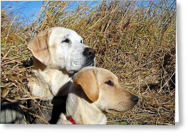 Attentive Labrador Dog Greeting Cards - The Duck Hunting Team Greeting Card by Jean Noren