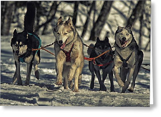 Husky Greeting Cards - The Team Greeting Card by Mountain Dreams