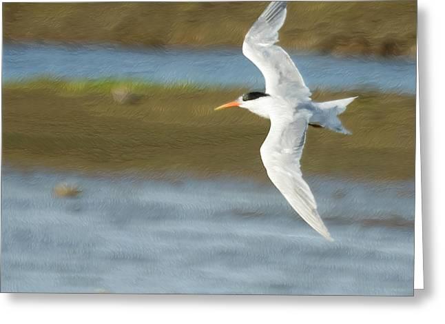 Tern Greeting Cards - The Tern Sq Greeting Card by Ernie Echols