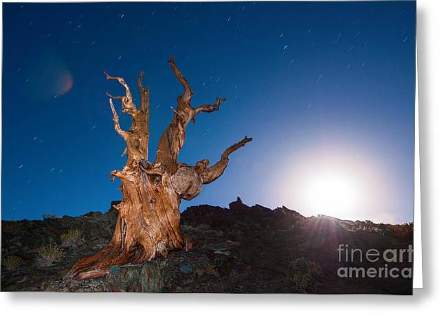 Moonrise Greeting Cards - The Test of Time - Lightpainting the Ancient Bristlecone Pine Tree with star trails. Greeting Card by Jamie Pham