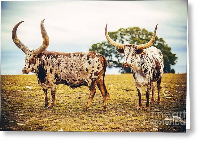 Cowboy Life Photographs Greeting Cards - The Texas Longhorn Greeting Card by Katya Horner
