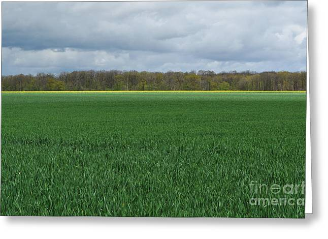 Wheat Field Sky Pictures Greeting Cards - The thin yellow line Greeting Card by Simona Ghidini