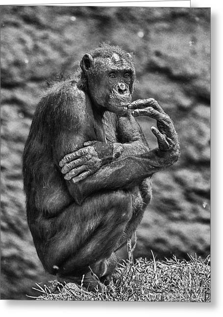 Pensive Greeting Cards - The Thinker Greeting Card by Douglas Barnard