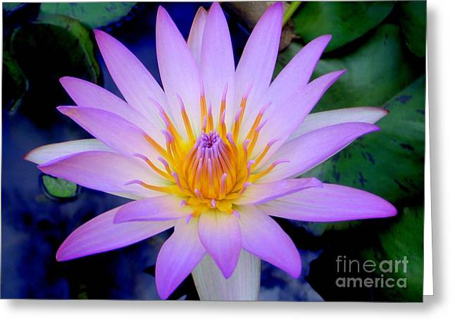 Mary Deal Greeting Cards - The Thousand Petaled Lotus Greeting Card by Mary Deal
