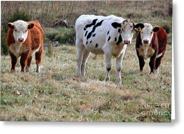 Three Cows Greeting Cards - The Three Amigos in Pastel Greeting Card by Suzanne Gaff