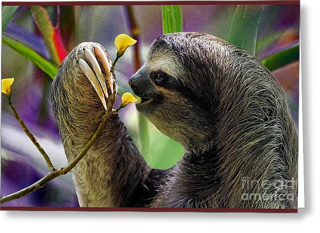Sloth Greeting Cards - The Three-Toed Sloth Greeting Card by Gary Keesler