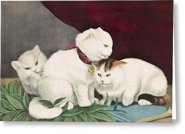 Breeds Greeting Cards - The three white kittens circa 1856 Greeting Card by Aged Pixel