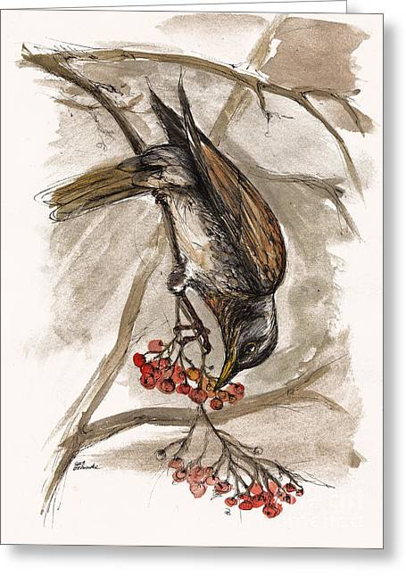 Thrush Greeting Cards - The Thrush eating cranberries Greeting Card by Angel  Tarantella