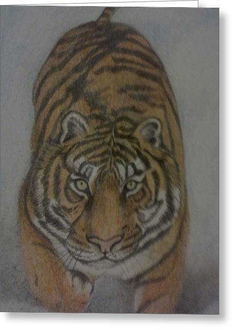 Bengal Drawings Greeting Cards - The Tiger Greeting Card by Christy Brammer