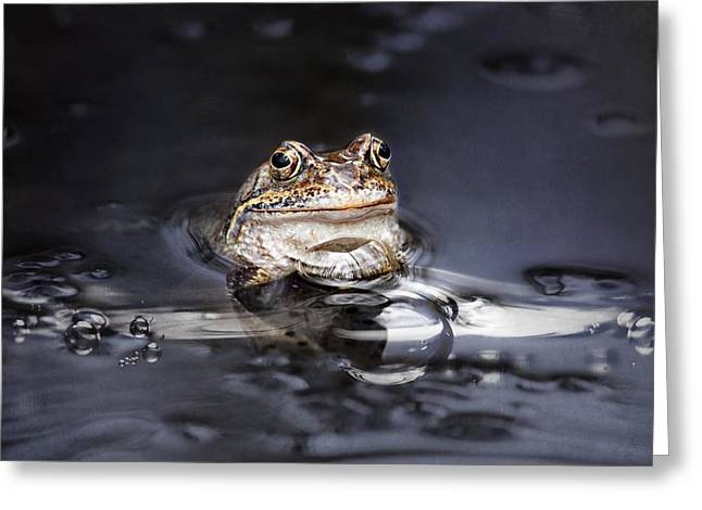 Amphibian Mixed Media Greeting Cards - The Toad Greeting Card by Heike Hultsch