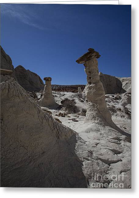Toadstools Greeting Cards - The Toadstools Greeting Card by Timothy Johnson