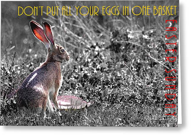 Nursery Rhyme Greeting Cards - The Tortoise and The Hare Dont Put All Your Eggs In One Basket Easter Sunday 40D12379 bw Greeting Card by Wingsdomain Art and Photography