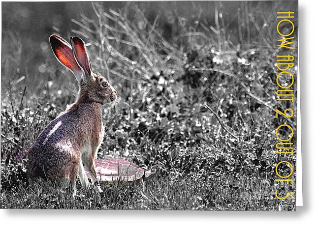 Hare Digital Art Greeting Cards - The Tortoise and The Hare How About Two Out of Three 40D12379 black and white Greeting Card by Wingsdomain Art and Photography
