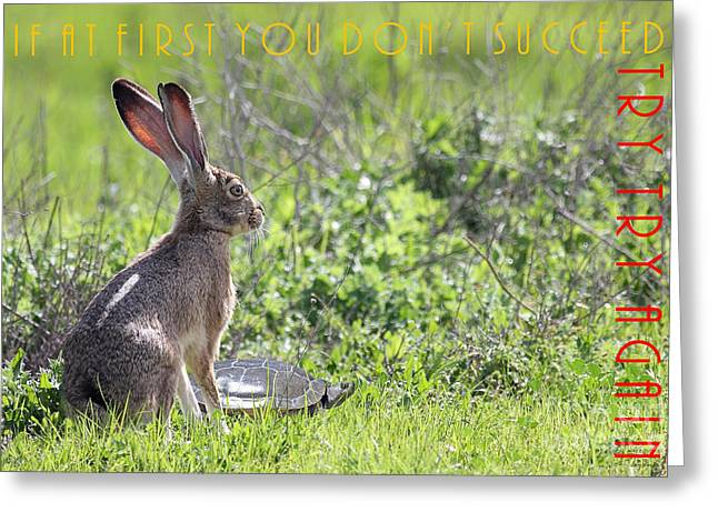 Hare Greeting Cards - The Tortoise and The Hare Try Try Again 40D12379 Greeting Card by Wingsdomain Art and Photography