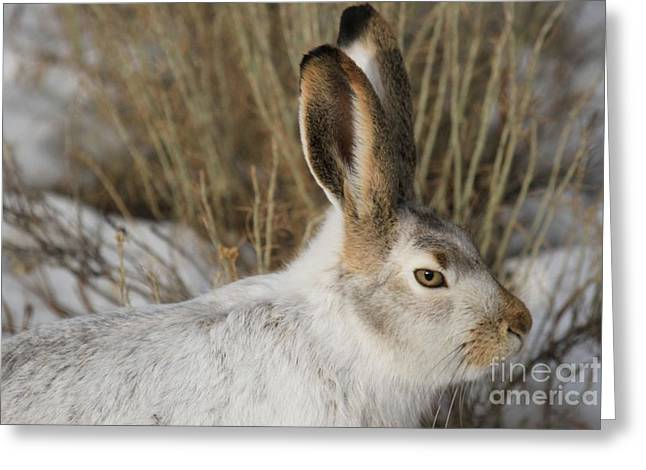 Jack Rabbit Greeting Cards - The Tourtise And The... Greeting Card by Adam Jewell