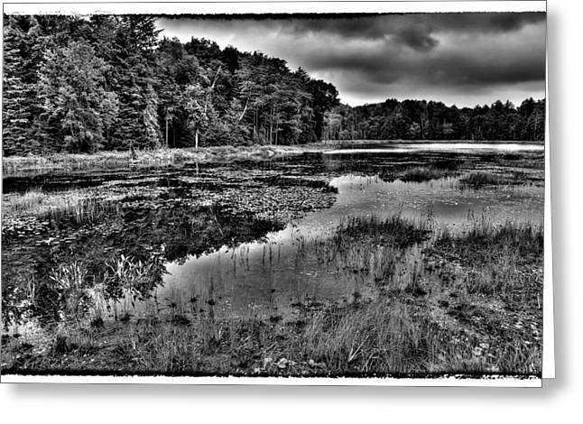Old And New Greeting Cards - The Tranquil Fly Pond Greeting Card by David Patterson