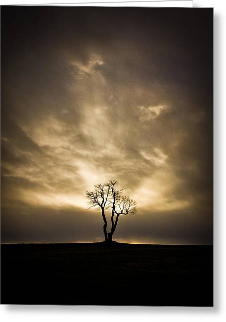 Resilience Greeting Cards - The Tree Greeting Card by Benjamin Williamson