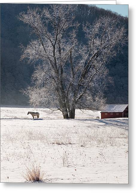 Rural Snow Scenes Greeting Cards - The Tree Greeting Card by Bill  Wakeley