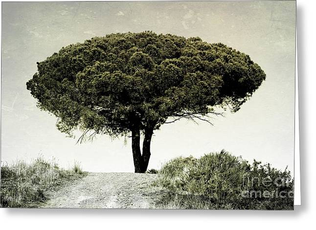 Umbrella Pine Greeting Cards - The Tree on the Top of the Hill Greeting Card by Clare Bevan