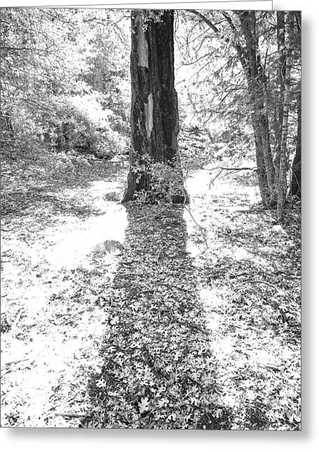 """""""shadow Trees"""" Greeting Cards - The Tree Greeting Card by Peter Tellone"""