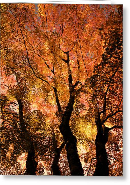 The Trees Dance As The Sun Smiles Greeting Card by Don Schwartz
