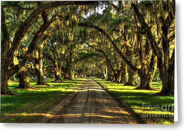 Civil War Site Greeting Cards - The Live Oaks of Tomotley Plantation Greeting Card by Reid Callaway