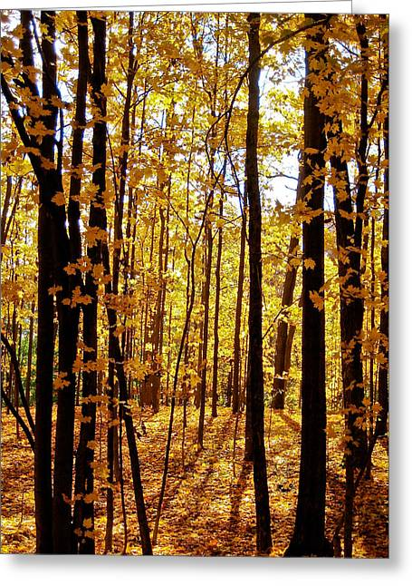 Indiana Autumn Greeting Cards - The Trees Through the Forest Greeting Card by Anthony Doudt