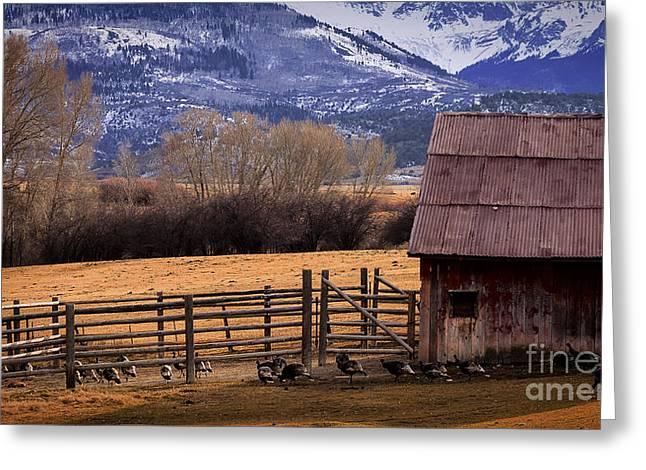 Barn Yard Greeting Cards - The Turkey Ranch Greeting Card by Janice Rae Pariza