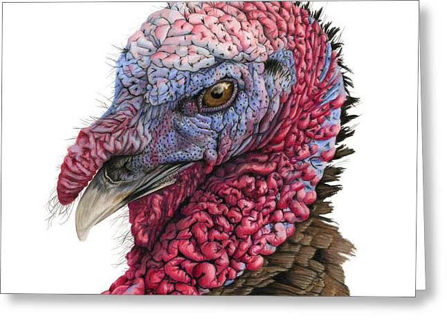 Turkey Greeting Cards - The Turkey Greeting Card by Sarah Batalka