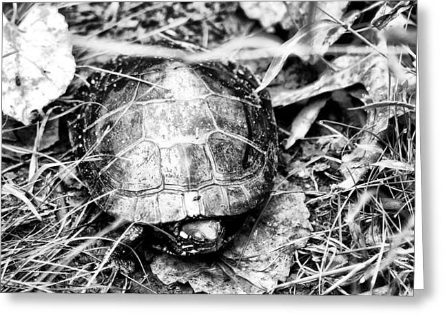 Wood Turtle Greeting Cards - The Turtle in the Woods Greeting Card by Bill Cannon