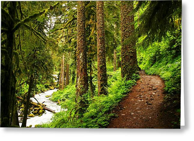 Featured Art Greeting Cards - The Twisting Path Winding Through Paradise  Greeting Card by Jeff  Swan
