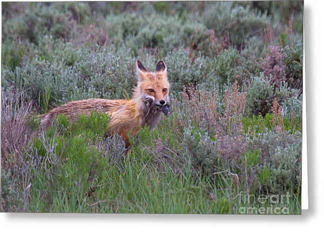 Photographs With Red. Greeting Cards - The Two-fer Greeting Card by Jim Garrison