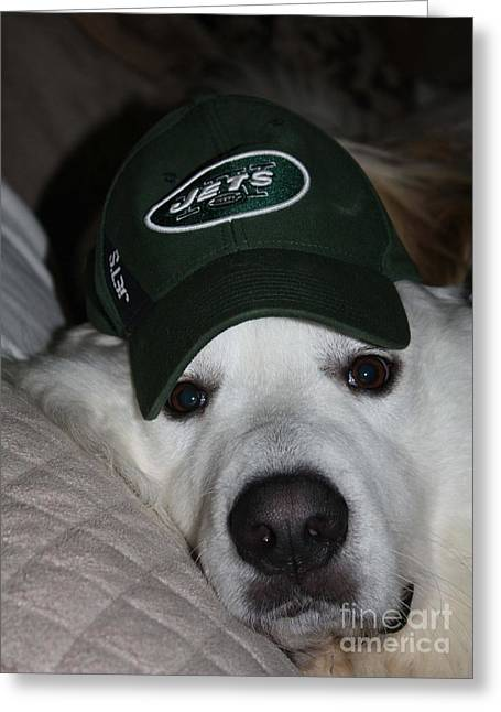 Dog On Couch Greeting Cards - The Ultimate NY Jet Fan After A Loss Greeting Card by John Telfer