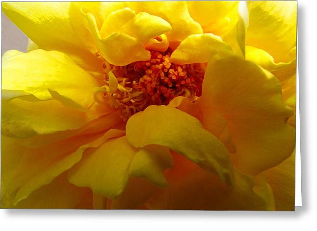 The Ultimate Yellow Rose Greeting Card by Joyce Dickens