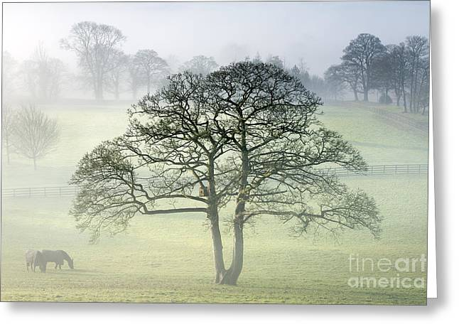 Vale Greeting Cards - The Vale of York from Crayke Greeting Card by John Potter